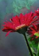 Gerbera Daisy Paintings - He Loves Me Not by Anne Kitzman