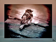 Sparrow Prints - He watched the world go by and he wondered... Print by Karen Lewis