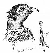Iowa Drawings - Head and Foot of a Chinese Ringneck Rooster Pheasant by Kevin Callahan