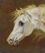 Horse Portraits Prints - Head of a Grey Arabian Horse  Print by Martin Theodore Ward