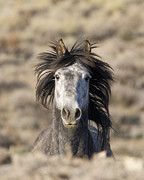 Grey Horse Photos - Head On by Carol Walker