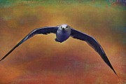 Flying Seagull Art - Heading Home by Deborah Benoit