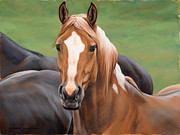 Barn Metal Prints - Heads Up Metal Print by JQ Licensing