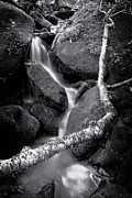 Gatlinburg Prints - Headwaters Print by Ray Kent