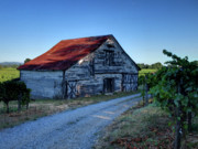 Sonoma County Vineyards. Digital Art Prints - Healdsburg Barn Print by Joan McDaniel