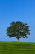 Individuality Posters - Healthy Tree Poster by John Greim