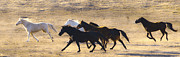 Equine Photo Posters - Hear the Thunder Poster by Ron  McGinnis
