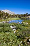 Mammoth Lakes Art - Heart Lake Folaige by Chris Brannen