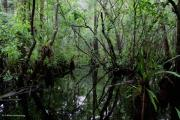 Collier Originals - Heart of the Swamp by Barbara Bowen