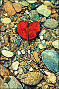 Gatlinburg Photo Posters - Heart on the Rocks Poster by Susie Weaver