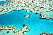Heart Reef Framed Prints - Heart Reef In The Great Barrier Reef Marine Park, Whitsunday Islands, Coral Sea, World Heritage Area, Queensland, Australia Framed Print by Peter Walton Photography
