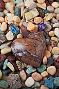 Geology Posters - Heart stone among river stones Poster by Garry Gay