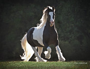 Gypsy Prints - Heart Throb Stallion Print by Terry Kirkland Cook