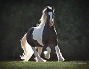 Terry Kirkland Cook - Heart Throb Stallion