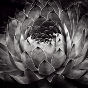 Cactus Metal Prints - Heart Metal Print by Tim Nichols