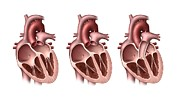 Heart Healthy Posters - Heart Valves, Artwork Poster by Henning Dalhoff