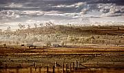 Rural Landscapes Metal Prints - Heartland Metal Print by Holly Kempe