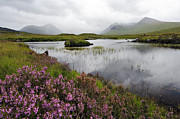 Rannoch Photo Prints - Heather and Mist on Rannoch Moor - D002270 Print by Daniel Dempster