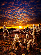 Environement Photo Posters - Heaven and Earth Poster by Phil Koch