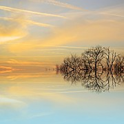 Silhouette Digital Art - Heavenly Branches by Sharon Lisa Clarke