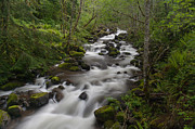 Creek Prints - Heavenly Flow Print by Mike Reid