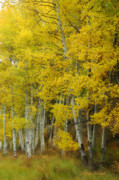 Yellow Leaves Metal Prints - Heavenly Light Metal Print by Donna Blackhall
