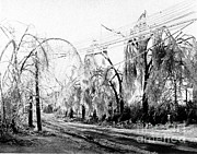 Telephone Wires Prints - Heavy Hand Of Winter On Trees Print by Science Source