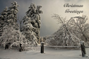 Snowy Holiday Card Posters - Heavy Laden Christmas Card Poster by Lois Bryan