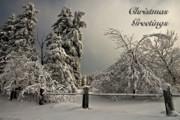 Heavy Laden Christmas Card Print by Lois Bryan