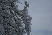 Snow On Branches Prints - Heavy Snow Print by John Dwiggins