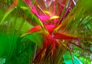 Heliconia Framed Prints - Heliconia Framed Print by William Wetmore