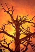 Damnation Metal Prints - Hell Metal Print by Charles Dobbs