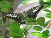 Butterfly Prints Artwork Photo Acrylic Prints - Hello Acrylic Print by Ann Willmore