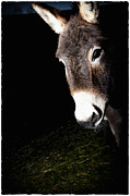 Donkey Photo Metal Prints - Hello Metal Print by Monte Arnold