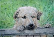 Garden Scene Drawings - Hello Puppy by Yvonne Johnstone