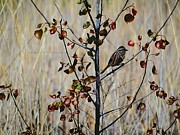 Bird On Tree Prints - Hello Sparrow Print by Beth Akerman