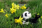 Hello Spring. Ginny From Travelling Pandas Series. Print by Ausra Paulauskaite