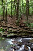 Moss Green Prints - Hemlock Forest Stone Ledge and Stream Print by John Stephens
