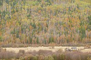 Gigapan Prints - Hemp Creek autumn Print by Dave Belcher
