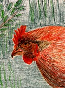 Produce Drawings Prints - Hen Print by Barbara Moignard