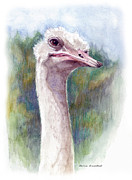 Ratite Drawings Prints - Henry the Ostrich Print by Mamie Greenfield