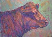 Farm Animals Pastels Prints - Henrys Red Angus Print by Susan Williamson