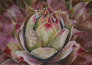 Flower Gardens Pastels Prints - Hens and Chicks Print by Joanne Grant