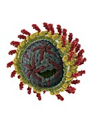 Virion Art - Hepatitis C Virus, Molecular Model by Ramon Andrade 3dciencia