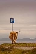 Whimsical Photo Prints - Her Favourite Pick-nick Spot In The Highlands Print by Dorit Fuhg