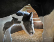 Foal Framed Prints - Her First Morning Framed Print by Terry Kirkland Cook