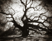 Live Oak Trees Posters - Her Magesty Poster by Amy Tyler