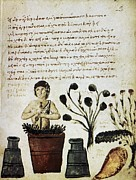 Byzantine Metal Prints - Herbal Medicine, 10th Century Metal Print by