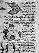 Traits Prints - Herbal Medicine, 8th Century Print by