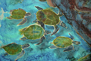 Sea Turtles Mixed Media - Herd of Turtles by Jill Targer